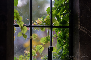 Through the Window ~ Cotswold Cottage, The Henry Ford