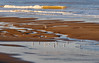 Affinity (Colin-47) Tags: affinity norfolk northnorfolk eastanglia uk panasonicdmcg80 lumixgvario100300f456ii m43 microfourthirds beach birds gulls water sea colin47 november 2017 sand