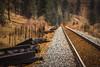 Railway (Lauren Eve Photography) Tags: wildlifephotography albertaphotography banffphotography peytolake emeraldlake abrahamlake lindalake lakeohara vermilionlake banffalberta wolfphoto wolf fox bear grizzly elk deer animalphotos lakereflections jasperalberta bowriver bowvalleyphotography landscapephotography canadianlakes rockymountains canadianrockies lensball canoephoto supermoon washingtondc roadphoto tentphoto campingphoto