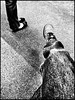 Listening (Bob R.L. Evans) Tags: blackandwhite graytones ipadphotography unusual threelegs feet shoes legs carpet