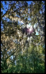 10/24/17 - Segway Plantation Tour in Hilton Head Island, SC (CubMelodic23) Tags: october 2017 vacation trip hdr hiltonheadisland southcarolina segway tour plantation trees liveoaks