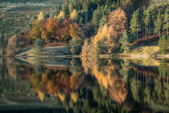Reflections Of Autumn (.Brian Kerr Photography.) Tags: scotland scottishlandscapes scottish scotspirit scottishborders scotspines scottishlandscape sony a7rii availablelight autumn beautifulmorning light reflections autumncolours briankerrphotography briankerrphoto landscapephotography landscape nature naturallandscape natural outdoor outdoorphotography opoty forest tree wood water
