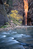 Fall in the Narrows (David Swindler (ActionPhotoTours.com)) Tags: narrows zion utah zionnationalpark fall autumn thenarrows