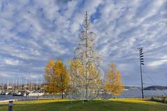 Autumn and Christmas in Oslo, Norway (Ingunn Eriksen) Tags: autumn christmastree oslo norway sky clouds tjuvholmen akerbrygge nikond750 nikon