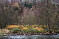 Breathtaking autumn colours (RIch-ART In PIXELS) Tags: belgium ardennes amblève river riverside stoumont leicadlux6 leica dlux6 autumn forest tree ferns landscape water