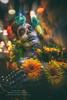 Fazzad-6D-2017-11-01-36106 16x24 b wl (Fuad Azzad) Tags: catrina catrin morte dead calavera calaca muerte muerto tradition tradição méxico honduras tegucigalpa disfraz costume