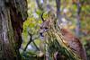 Shy Velvet Paws (aexl21) Tags: natur nature luchs lynx katze cat samtpfote savethenature animals tier saveourplanet tierfotografie animalphotography deutschland ngc