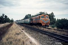 2815 X1005 Australind Kenwick Flyover 29 January 1982 (RailWA) Tags: railwa philmelling westrail 1982 x1005 australind kenwick flyover