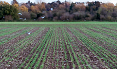 The Big Field Stoke Poges Buckinghamshire November 2017 (Photo 10 KH) Tags: photo10kh photography10kh 10000 hours deliberate dedicated practice learning art photography mastery masteringphotography landscapephotography