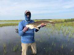 Tailing Redfish on the Fly ~ Kure Beach & Bald Head Island, NC (GPCarlo) Tags: redfish fly fishing kure beach tailing reds bald head island