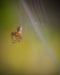 Suspendue (jf.cudennec) Tags: nature animal wildlife wild spider spiderweb web bokeh blur smooth autumn fall macro macrophotography canon 70d 100mm drop droplet dew