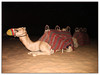 Resting (LesleyPhillips Images) Tags: dubai desert camels dark animals night uae arabiandesert
