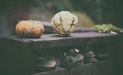 The garden's last gourds (MontanaRoots (aka Craig)) Tags: garden gourds faded fall autumn squash pumpkin