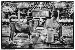 All is One - Welcome to Samsara. Physical Manifestations in Analog and Digital Section PEOPLE © copyright Mauro Fattore all rights reserved #blackandwhite #streetphotography #people #asian #asiantravel #peoplephotography #peopleportraits #nofilt (Mauro Fattore - Dreams Photo Art) Tags: igasia blackandwhite peoplephotography buddhism asian asiancontest blackandwhitephoto monk thailand photoreportage nofilter canonlens streetstyle traveling amazingasia streetphotography urban petportrait peopleportraits street asiantravel bwphotochallenge portraiture urbanstyle urbancapture streetportrait picsoftheday dog people