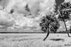 Myakka State Park (sarasotab) Tags: bw blackandwhite landscape subtropical florida park clouds