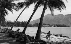 Dương Beach (Poplar Beach) - Bãi Dương - Nha Trang - 1968 (Nguyen Ba Khiem) Tags: 1960s 1968 hìnhảnhxưa việtnam việtnamxưa nhatrang nhatrangxưa nguyễnbámậu phongcảnh biển nước dừa bãidương hònchồng
