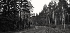 Curve (Stefano Rugolo) Tags: stefanorugolo pentax k5 smcpentaxda1855mmf3556alwr monochrome landscape curve bend tree hälsingland sweden sverige ricoh ricohimaging