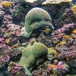 Coral reef, Burgers Ocean, Arnhem, Netherlands - 0323 thumbnail