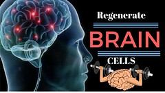 How To Regenerate 😲Brain Cells - 10 Steps To Grow New Brain Cells! Boost Your Brain Function Today (wwefunnyclasher) Tags: how to regenerate 😲brain cells 10 steps grow new brain boost your function today