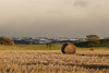 A Tale of Two Halves (Jamesylittle) Tags: bales farm field winter snow split sun green white cold frost countryside landscape