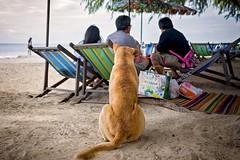 171205PS508 (peter skaugvold) Tags: leica leicacamera leicaq thailand travel travelphotography trip holiday kids kid boys boy beach beachlife documentary life brothers sun hot outdoor outdoors