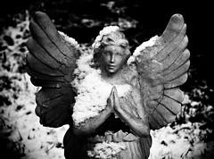 Snow Angel (caymanmamma) Tags: angel woottonwawen catholiccemetery snow december monochrome blackandwhite