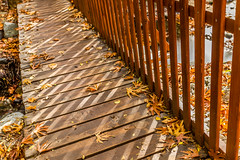 Caledonia Trail (25) (Polis Poliviou) Tags: nicosia autumn life polispoliviou polis poliviou πολυσ πολυβιου cyprus cyprustheallyearroundisland cyprusinyourheart yearroundisland zypern republicofcyprus κύπροσ cipro кипър chypre chipir chipre кіпр kipras ciprus cypr кипар cypern kypr ©polispoliviou2017 europe fall naturephotography forestphotography heritage mediterranean morning 2017 caledoniawaterfalls troodosmountains kalidoniawaterfalls naturepics forest tree trees trekking walking hiking nationalpark nationaltrail leaf leaves water waterfall waterfalls platanus platanustree planetree planetrees caledoniafalls naturetrail naturepath pinetree love relax relaxing longexposure