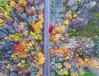 On Track (Matt Champlin) Tags: rr railroad ontrack fall autumn beautiful nature landscape trees colorful rail fingerlakes aerialphotography dronephotography drone drones dji djimavic mavicpro iamdji cny flx swamp november tgif friday country rural 2017