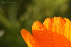 orange & green (photos4dreams) Tags: gersprenz06112017p4d gersprenz landschaft münster hessen photos4dreams p4d photos4dreamz susannahvvergau nature natur canoneos5dmark3 canoneos5dmarkiii