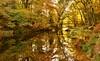 RIVER TEIGN BEAUTY 2017 (russell D7000 (D80)) Tags: drewsteignton foot bridge weir reflections autumn trees rustic tones beauty devon england river teign dartmoor easton rnbteign