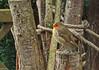 Rouge gorge en pleine pensée... (Crilion43) Tags: arbres région centre oiseaux véreaux paysages animaux mésanges villes