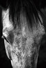 swirls (Jen MacNeill) Tags: blackandwhite bnw bw horse horses equine moody animal pet detail details dapple grey gray hair fur texture