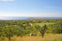 Cabo 2017 513 (bigeagl29) Tags: cabo del sol desert course golf club mexico san jose scenic scenery landscape ocean cabo2017