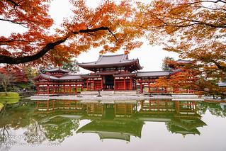 Kyoto 下鴨神社 西本願寺 楓葉 銀杏 祉園白川 宇治 平等院