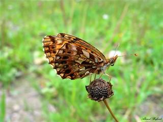 Butterfly 1490