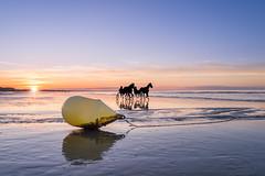 Coucher de soleil (tjwsphotographies) Tags: nikon nikkor france calvados cabourg normandie plage plagedecabourg coucherdesoleil soleil mer vagues dusk vacances sunset sea seascape sun landscape paysage waves horses chevaux cheval sulky