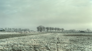 A row of shivering trees.