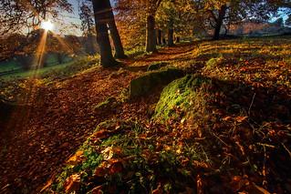 The Autumn Path