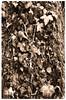 Essence of light (Claudio Taras) Tags: claudio contrasto controluce canona1 taras trier toned filmisnotdead digitaltoned 35mmfilm 50mm14 fd50mm film flower fomapan foglie foma fomapan100 analogica analogico autunno bw bokeh biancoenero