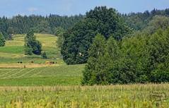 Summer landscape (Jurek.P) Tags: mazury masuria landscape fields meadows poland polska summer jurekp sonya77