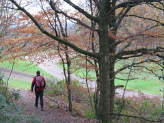 UK - Surrey - Near Dorking - Walking through Deepdene (JulesFoto) Tags: uk england surrey ramblers capitalwalkers dorking walking deepdene