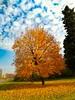 Autumn #mybulgaria #bulgariaofficial #Burgas #Bulgaria #asus #asuszenfone (kamenkaludov) Tags: burgas asuszenfone asus bulgariaofficial mybulgaria bulgaria