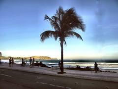 DSCF0706 - Fim de Tarde - Rio de Janeiro - Brasil (Marcia Rosa ()) Tags: palmeira coconut coqueiro beach ocean gente people entardecer cabo frio marciarosa