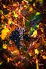 Wine wine wine (Riccardo Maria Mantero) Tags: mantero riccardomantero riccardomariamantero fruit grapes landscape outdoors travel wine