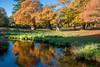 Bradgate Reflections (alanrharris53) Tags: bradgate bradgatepark colour color autumn leaves oak tree trres reflections pool pond water