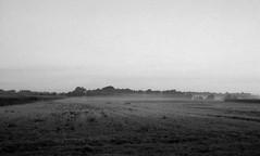 Forlorn (Rosenthal Photography) Tags: morgendämmerung ilfordhp4 asa125 epsonv800 ff135 twiste landschaft bnw bohnste schwarzweiss bw 20171002 olympus35rd analog 35mm desolate lonely forlorn landscape autumn nature muood mist fog rain fields trees ilford epson v800 blackandwhite hp4 hp4plus zuiko 40mm dawn