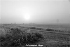 a black and white world (HP019872) (Hetwie) Tags: natuur frost ijs heather nachtvorst ice zonsopkomst kou rijp nature sunrise ochtend strabrechtseheide strabrecht frozen vorst heide lierop noordbrabant nederland