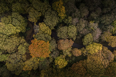 Above the canopy - Autumn Colours (Steve Samosa Photography) Tags: autumn autumntrees trees forest woods woodlands aerialview topdownview droneshot dronecamera drone aerial stevesamosaphotography