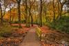 Autumn Colour (Steve Samosa Photography) Tags: autumn trees sthelens england unitedkingdom gb
