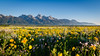Summer in the Tetons (HikerDude24) Tags: grandtetonnationalpark nationalpark landscape outdoors outdoor mountains mountain flowers wildflowers nikon d5100 tokina summer grandteton grandtetons tetons morning